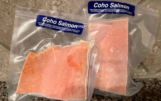 sizzlefish coho salmon review