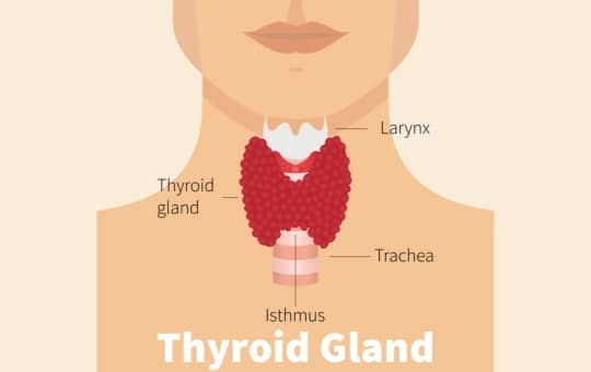 thyroid gland infographic